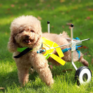 PW - AB Disabled Dog Wheelchair Paralyzed Pet Scooter Assistant